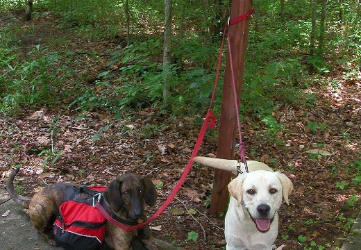 Leatherwood Ford.  Pixel and Gibson await big Hike.