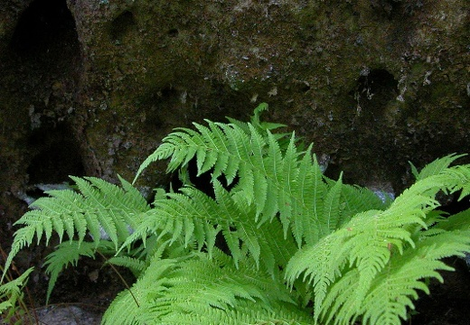 Sandstone and Fern.