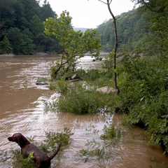 Pixel wades into the Big South Fork of the Cumberland River
