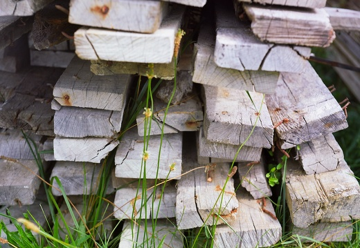 Old Wood Pile