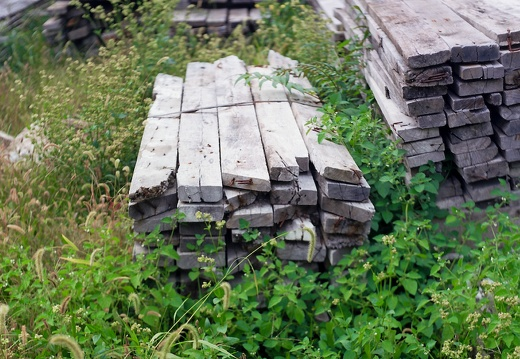 POld Wood Piles