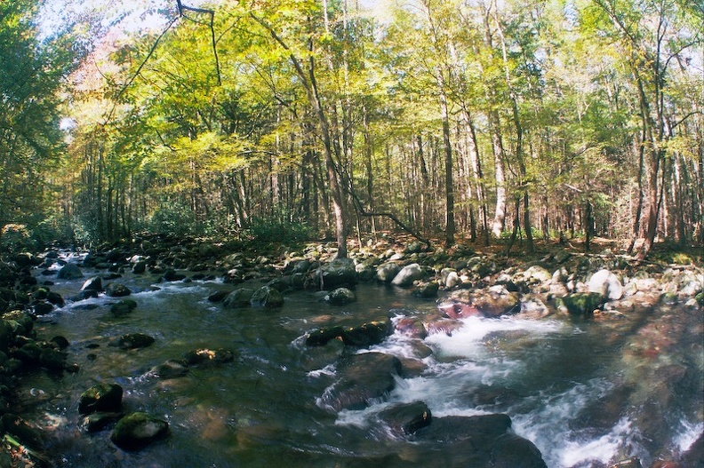 Middle Prong Little Pigeon River.jpg