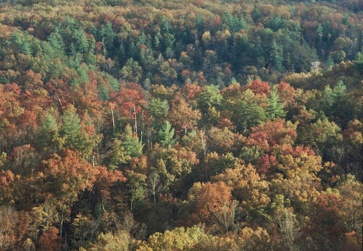 Red River Gorge in Fall