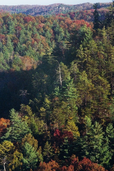 Red River Gorge in Fall 4.jpg