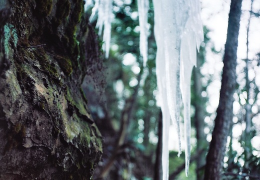 Ice on the Sheltowee Trace