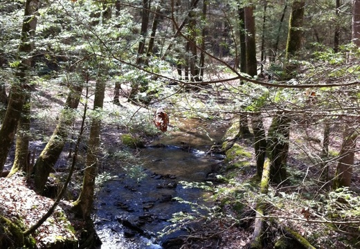 Martins Fork, Red River Gorge