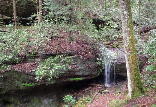 Hawk Creek Gorge spring morning hike